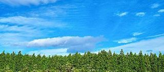 tree_woods_00049-1.jpg