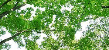 tree_woods_00008.jpg-1.jpg