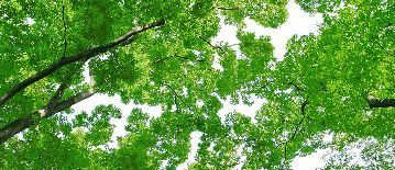 tree_woods_00008.jpg-2.jpg
