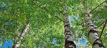 tree_woods_00009.jpg-1.jpg
