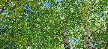 tree_woods_00009.jpg-2.jpg