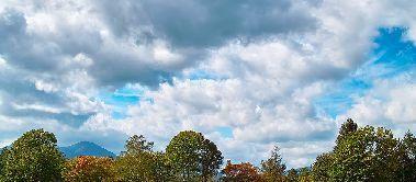 tree_woods_00017-1.jpg