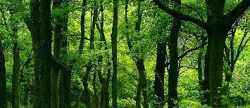 tree_woods_00020.jpg-1.jpg