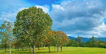 tree_woods_00027.jpg-1.jpg